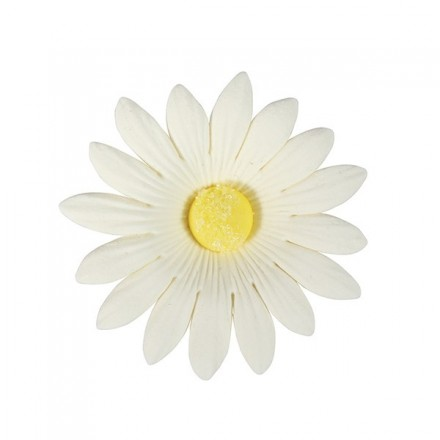 Sugar Soft Daisy White