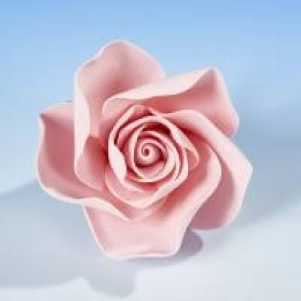 Open Roses - Pink