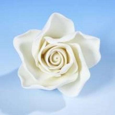 Open Roses - White