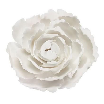 White Sugar Peony - 10cm