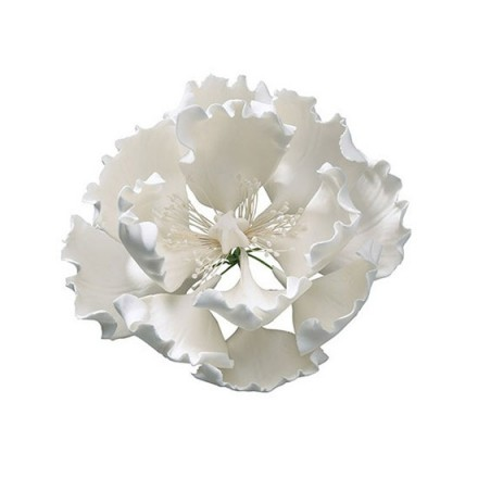 White Sugar Peony with Stamens - 10cm